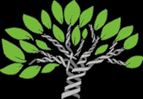 شجرة الإنسانية الجديدة