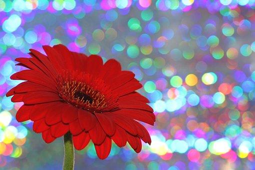 الفرح عطية، سمة، رسالة